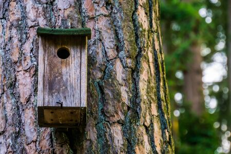 closeup of a wooden bird house hanging on a tree trunk, nature forest background