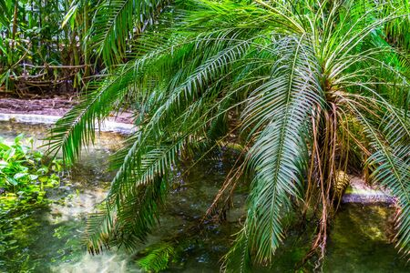 palm tree at the waterside, tropical garden, exotic nature background Imagens
