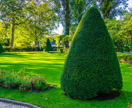 freshly pruned conifer tree in a beautiful garden, Gardening and upkeep, pruning art