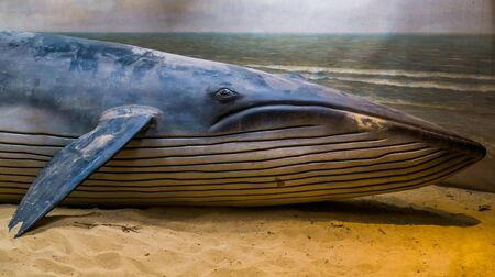 closeup of a whale sculpture on a artificial beach, washed up mammal on the shore