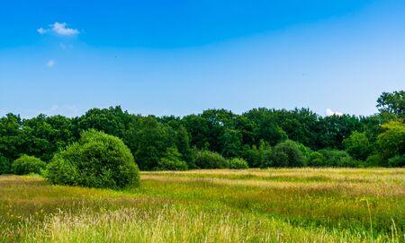 beautiful grass meadow with lots of trees, nature landscape in the melanen, Halsteren, Bergen op zoom, The Netherlands
