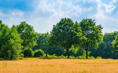 Golden grass meadow with trees and blue sky, Beautiful landscape in the Melanen, Halsteren, Bergen op zoom, The netherlands Stockfoto