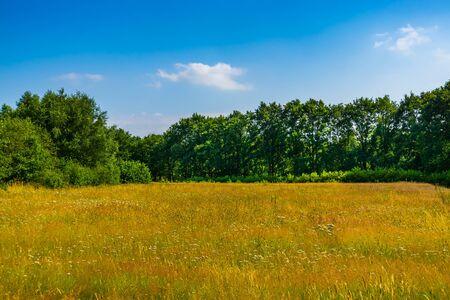 beautiful grass meadow landscape with lots of trees, the melanen, Halsteren, Bergen op zoom, The Netherlands