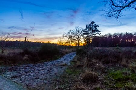 Walking path in the Rucphense heide during sunset, Heather landscape in the forest of Rucphen, The Netherlands