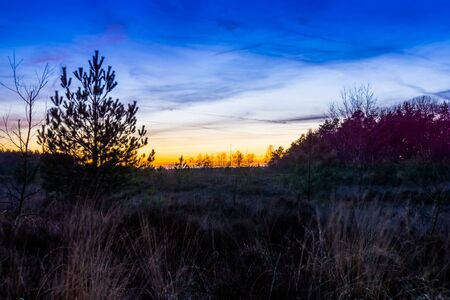 colorful and beautiful sunset on the Rucphense heide, Heather landscape in the forest of Rucphen, The Netherlands