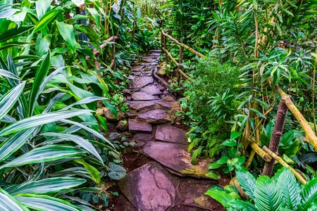 beautiful stone path with flowing water in a tropical garden, modern natural architecture Banque d'images