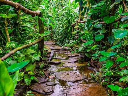 beautiful closeup of a stone path with flowering water in a tropical garden, modern natural architecture Banque d'images