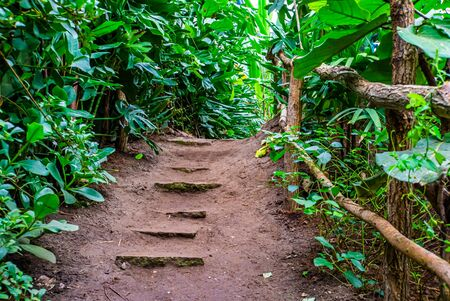 beautiful tropical garden with walking path, natural architecture, exotic scenery