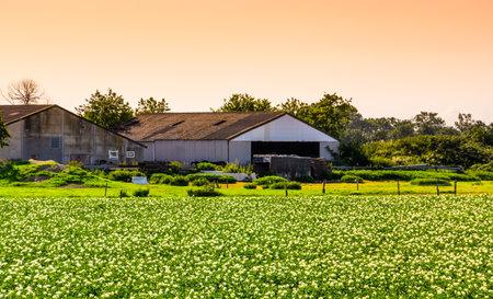 farm with flower field during sunset in waterlandkerkje, Zeeland, The Netherlands