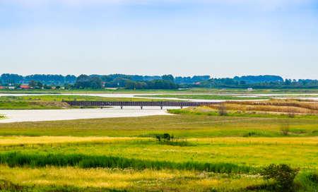 beautiful scenery of waterdunen nature reserver in Breskens, Zeeland, The Netherlands Zdjęcie Seryjne