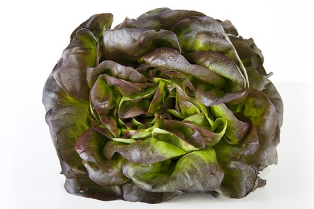 Head of red salanova lettuce covered with water drops. Stock Photo
