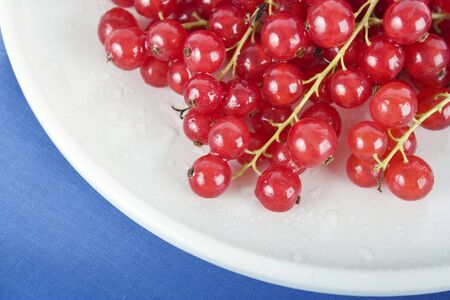 Close up of red currants on white plate with blue table cloth. photo