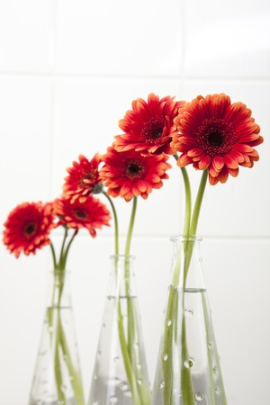 Four vases with red gerberas daisies.