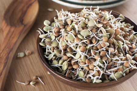 Healthy green and brown lentil sprouts in a wooden bowl  photo