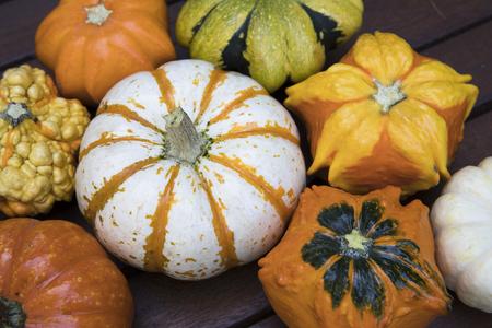 gourd: Colourful decorative autumn gourd.