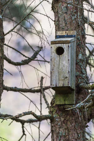 Bird house in a nature reserve in scotland glencoe hang on a tree in the forest during Spring.