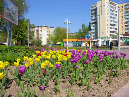 city pushkin: Minsk, Belarus - May 9, 2016: City street decoration - decorative flower beds, Prospect of Pushkin, Minsk