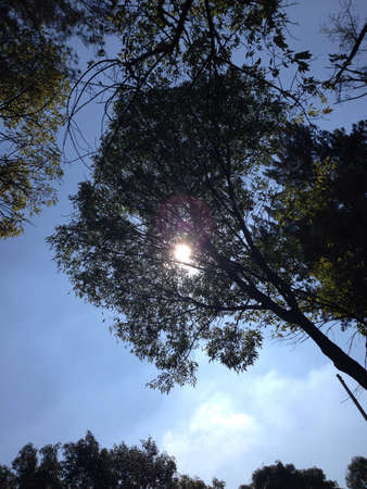 Looking at the sun through the trees Imagens