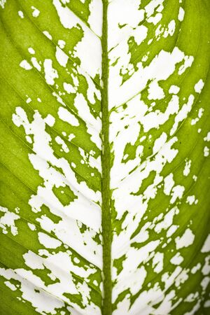 Leaf texture verde