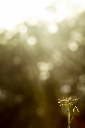 subsist: Seeds of hope