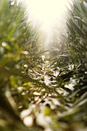 subsist: Lighting of hope