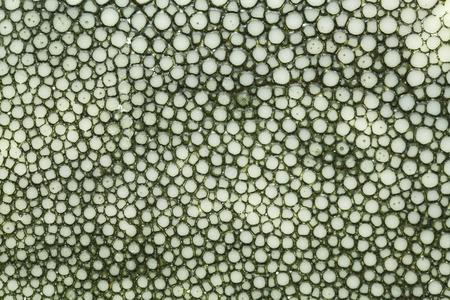 gnarled: Dark green gnarled texture