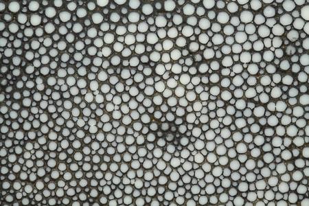 gnarled: Oscuro textura nudosa gris Foto de archivo