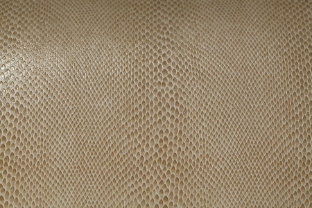Lucertola Water texture della pelle