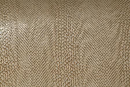 Water lizard skin texture Stock Photo