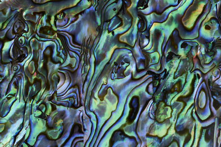 Abalone shell achtergrond structuur Stockfoto