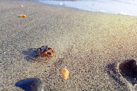 Crab walks on the beach near water