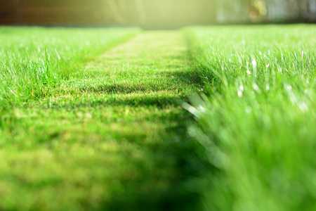 Cut strip of green grass. Mowing the lawn. Selective focus Imagens
