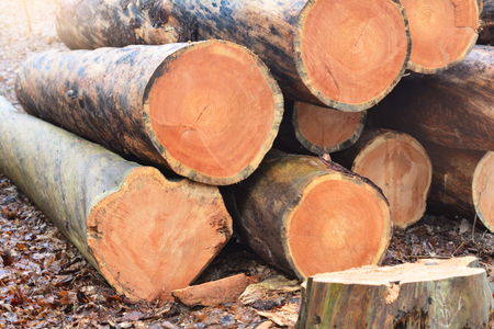 Wood cut logs in a forest. Woodcutting industry