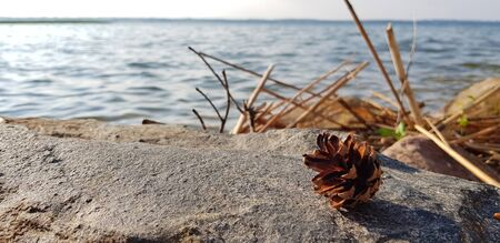 Pine cone on a stone near lake. Natural landscape Stock Photo