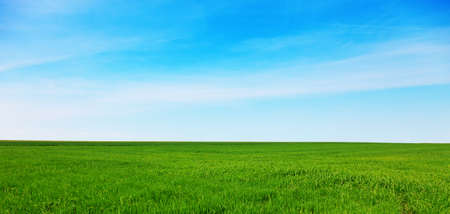 Green meadow with blue sky Banque d'images