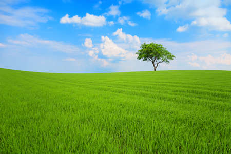 Field with tree under blue sky