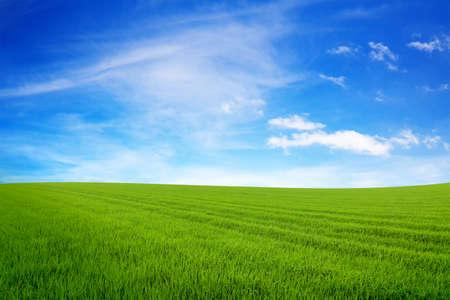 Planeta verde. Concepto de ecología