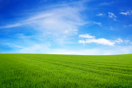 Zielona planeta. Pojęcie ekologii