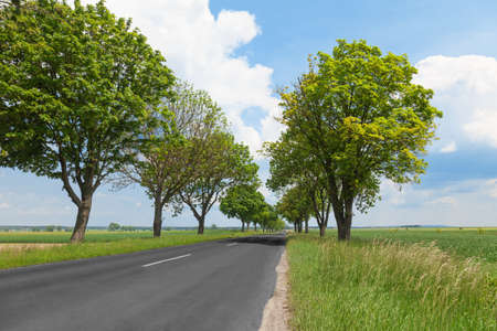 Road between trees in the countryside