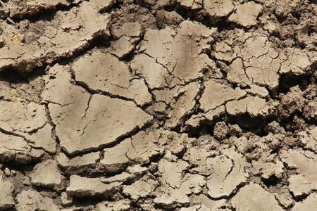 dryness: dry soil texture