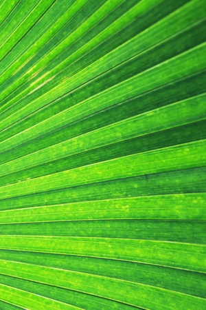 the texture of a green palm photo