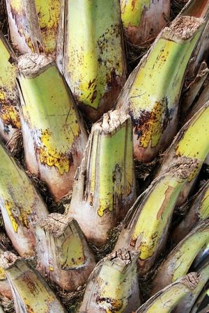 pattern of a palm tree bark Stock Photo - 11121990