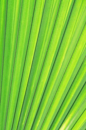 a green palm leaf texture Stock Photo - 11154793