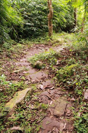 a forrest path in thailand Stock Photo - 11396478