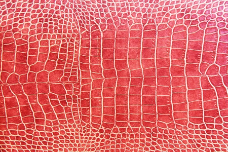 the reptile: red crocodile skin texture as a wallpaper Stock Photo
