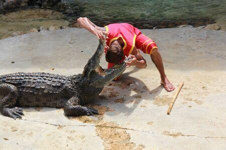 a crocodile show in thailand