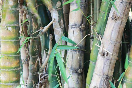 wallpaper of  bamboos tree photo