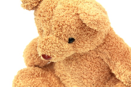 teddy bear in white background photo