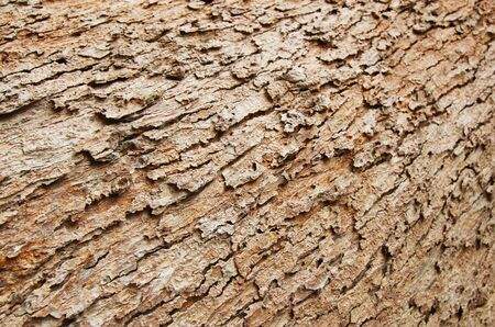 brown tree bark texture wallpaper Stock Photo - 13108380