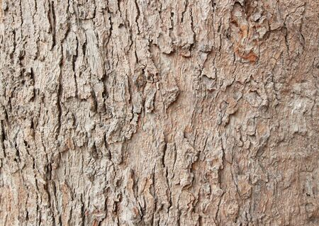 brown wooden bark texture wallpaper Stock Photo - 13108381